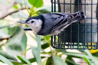 Best Birds-129