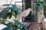 Best Birds-138