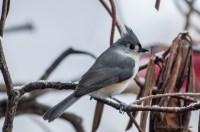 Best Birds-139