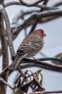 Best Birds-140