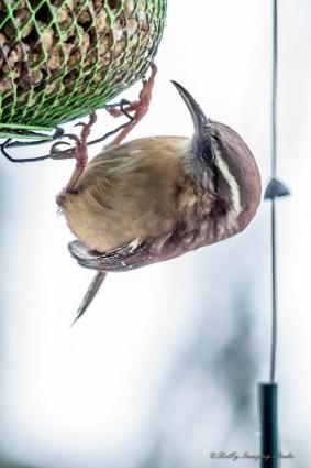 Best Birds-144
