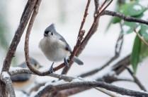 Best Birds-145