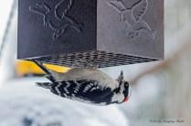 Best Birds-146