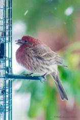 Best Birds-151