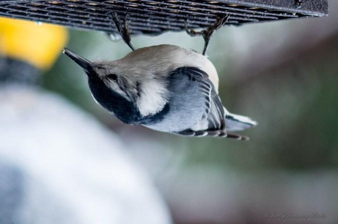 Best Birds-152