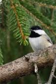 Best Birds-156