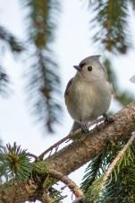 Best Birds-157