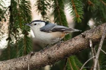 Best Birds-158