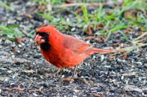 Best Birds-162