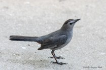 Best Birds-165