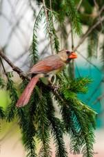 Best Birds-168