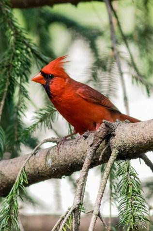 Best Birds-171