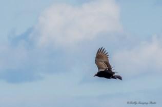 Best Birds-181