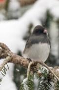 Best Birds-191