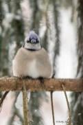 Best Birds-194