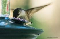 Best Birds-207