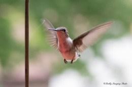 Best Birds-217