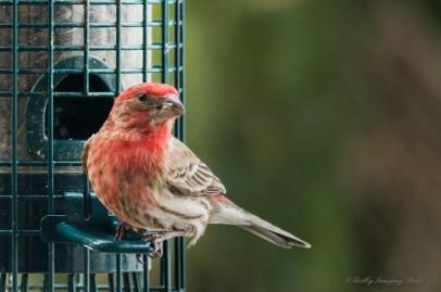 Best Birds-32