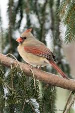 Best Birds-35