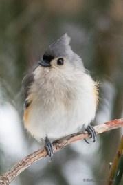 Best Birds-36