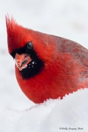Best Birds-37
