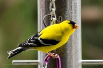 Best Birds-39