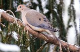 Best Birds-55