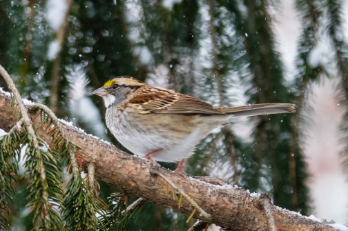 Best Birds-57