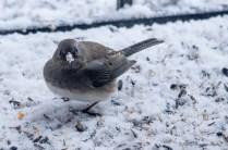 Best Birds-63