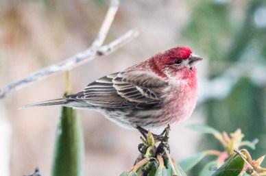 Best Birds-76