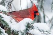 Best Birds-86