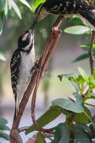 Best Birds-97