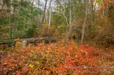 Atlantic County Park - Estell Manor - 04