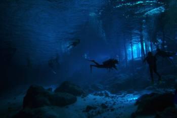 Stefanie Richardson Scuba Diving local langley realtor