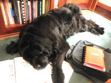 Canine assistant1