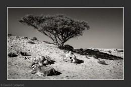 Bushes & rocky terrain No2