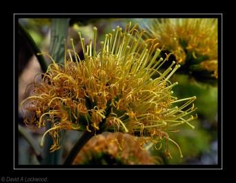 Garden Flower 3