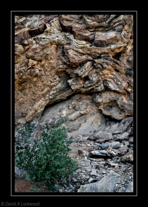 Plant & Rock formations