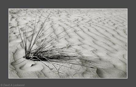 Sand & Grass Huqf