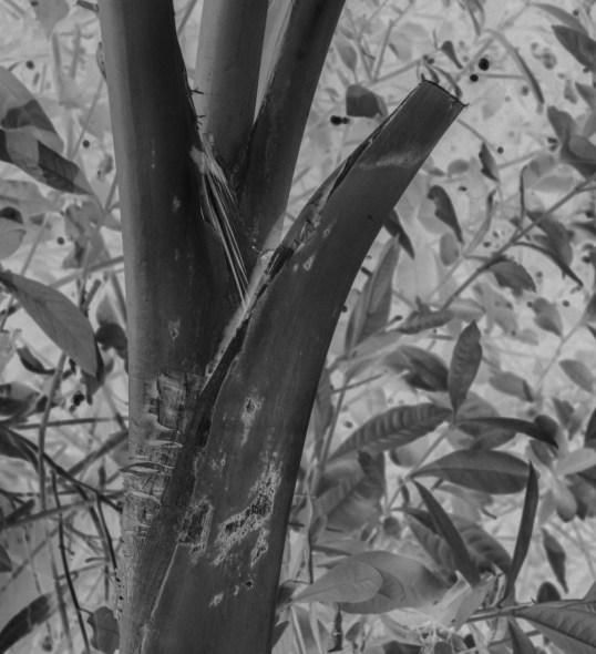 Palm Neg