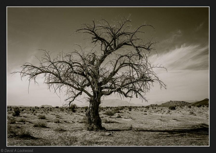 My friendly tree