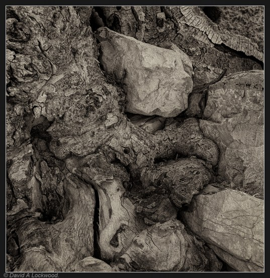 Tree root detail No2