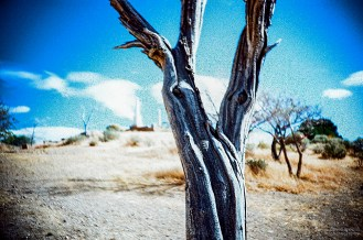 Tree, Virginia City Cemetry, Virginia City, Nevada. (Kodak Ektachrome E-100G film, process C-41).