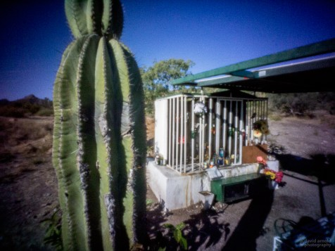 Cactus, Shrine Near Ligui, Highway 1, Baja California Sur, Mexico