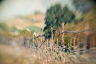 Borrowed Source: Fence Detail, Alfred Sisley, (French, 1839-1899), Meadow, 1874, National Gallery of Art.