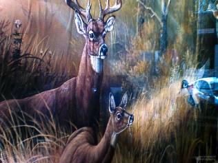 Two Deer and One Duck, B Street, Marysville, California