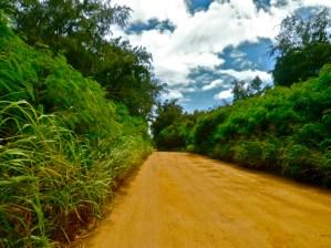 a_walking_road_Kaua'i