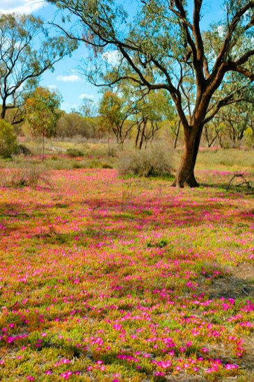 Australia's Dry Country after the rains
