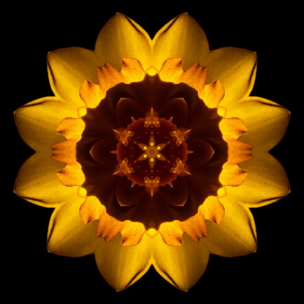 Yellow Daffodil I flower mandala