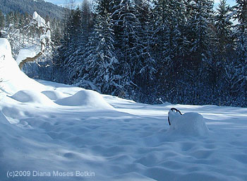 Diana's North Idaho snow.
